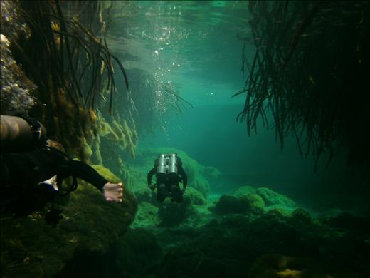 Scuba diving Casa Cenote